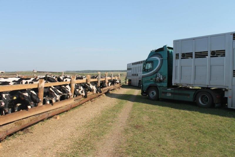 Livestock-trailer-10